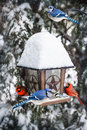 Birds on bird feeder in winter with blue jays and cardinals Stock Photos