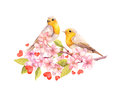 Birds on blossom branch with flowers. Watercolour Royalty Free Stock Photo