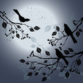 Birds on the branch during summer's night Stock Photo