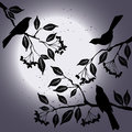 Birds on the branch during summers night d vector Stock Image