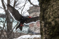 Birds at bronx zoo brids winter Stock Images