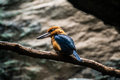 Birds at bronx zoo brids winter Royalty Free Stock Images