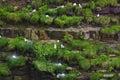 Birds colony Royalty Free Stock Photo