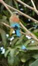 Birds in Costa Rica Stock Photos