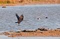 Birds Of Cutler Bay Wetlands, ...