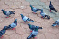 Birds doves pigeons waiting for feed at street bangkok thailand waiting for feed from people waiting for feed from people Stock Photo