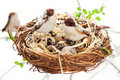 Birds and eggs in an Easter nest Stock Photo