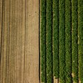 Birds eye view looking straight down at a crop field. The field has a divide with half of it green crop and half ploughed field Royalty Free Stock Photo