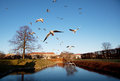 Birds flying cross the river copenhagen in rosenborg castle denmark Royalty Free Stock Photo