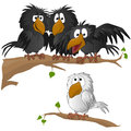 Birds funny bird vector illustration Royalty Free Stock Photos