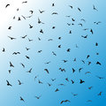 Birds, gulls, black silhouette on blue background. Vector Royalty Free Stock Photo