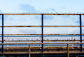 Birds high fence with some Stock Image