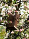 Birds house among cherry flowers Royalty Free Stock Photography