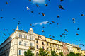 Birds in krakow flying poland Royalty Free Stock Photos
