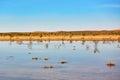 Birds in the lake of oasis in Sahara desert Royalty Free Stock Photo