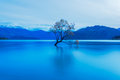 Birds on a lone tree at lake wanaka new zealand silky smooth waters due to long exposure early morning shot Royalty Free Stock Photo