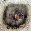 Birds Nest Stock Image