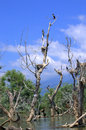 Birds nest on dead trees Royalty Free Stock Photo