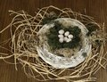 Birds nest decorated with seven eggs of great tit on wooden background scientific name parus major Stock Image