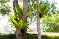 Birds nest fern Royalty Free Stock Photo