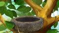 Birds Nest in a Tree Royalty Free Stock Photo