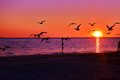 Birds , Ocean, Sunset,Sand this is the life !!!