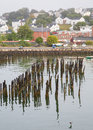 Birds on pilings in portland harbor seabirds old wooden the bay at maine Royalty Free Stock Photo