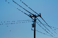 Birds on power lines Royalty Free Stock Photos