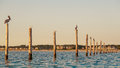 Birds on Pylons Royalty Free Stock Photo