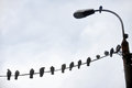 Birds resting on electric cable Royalty Free Stock Photo