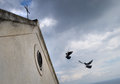 Birds roosting two landing on an italian church Royalty Free Stock Image