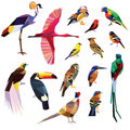 Birds set colorful low poly design on white background Stock Photo
