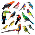 Birds set colorful low poly design on white background bluebird kingfisher cock of the rock finch crested bunting golden Royalty Free Stock Photos