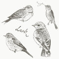 Birds set larks bird collection of sketch lark hand draw Royalty Free Stock Photos