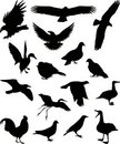 Birds silhouette 1 (+ vector) Royalty Free Stock Photo