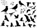 Birds silhouette Royalty Free Stock Photography