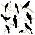 Birds silhouette set. Vector. Royalty Free Stock Photography