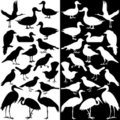 Birds silhouettes (Black and White) Stock Photos