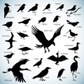 Birds silhouettes set of on abstract background Stock Photography
