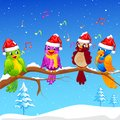 Birds singing Christmas Carol