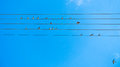 Birds singing and forming music tune on power lines in Sithonia Royalty Free Stock Photo
