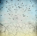 Birds in the sky Stock Image