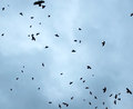 Birds in the sky evening Royalty Free Stock Photo