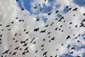 Birds in the sky flight agains a cloudy Royalty Free Stock Images