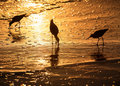 Birds at sunset Stock Image