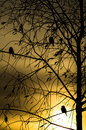 Birds at sunset sitting on a tree branch as silhouettes look very picturesque autumn wild bird almost deprived of Stock Images