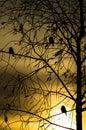 Birds at sunset. Royalty Free Stock Photo