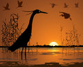 Birds in sunset swamp illustration Royalty Free Stock Photos