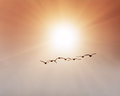 Birds Traveling South Stock Photography