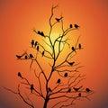 Birds and tree branch backlit sunlight vector design